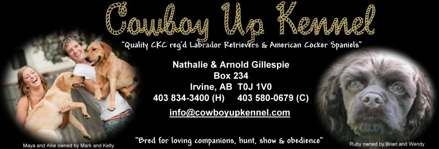 Cowboy Up Kennel - Lab breeders AB